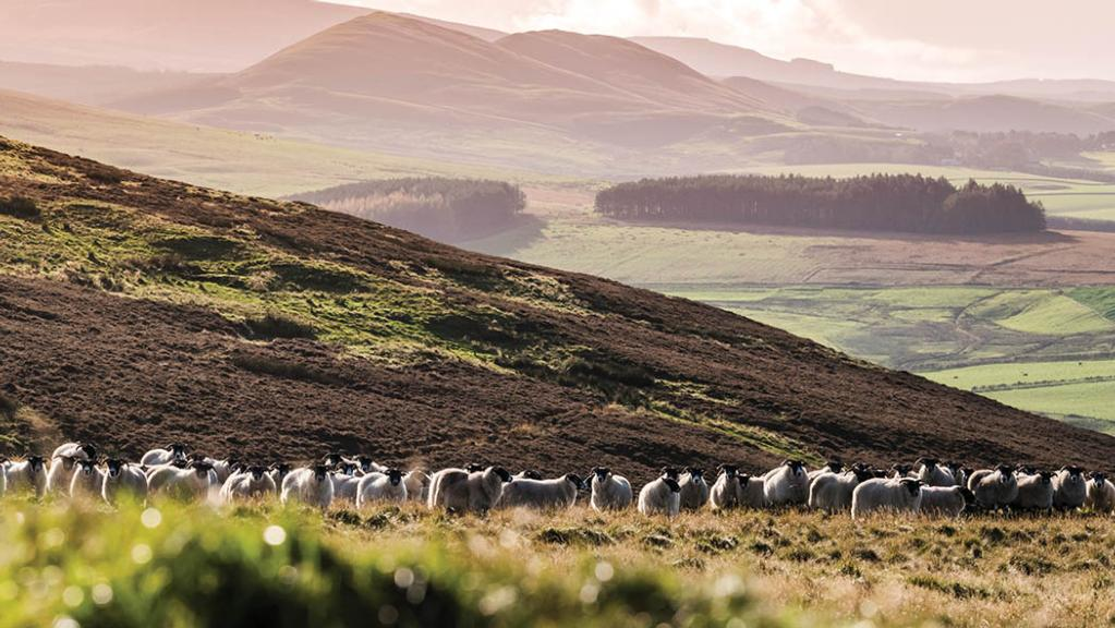 Demand from English buyers could reinvigorate Scottish land market