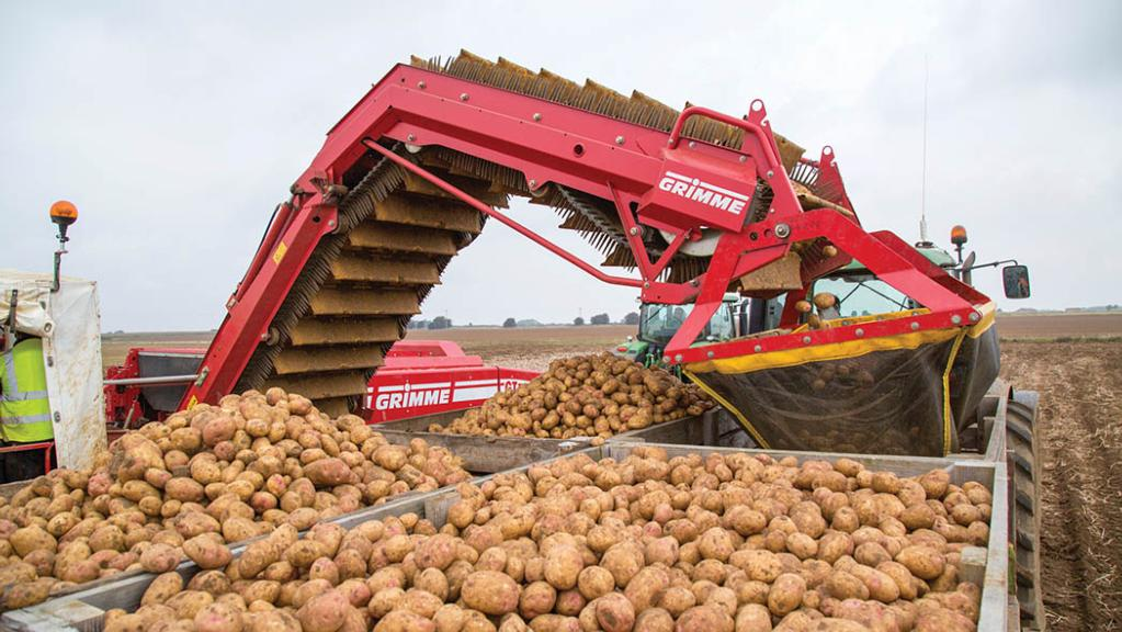 Growers hold on to potato stocks