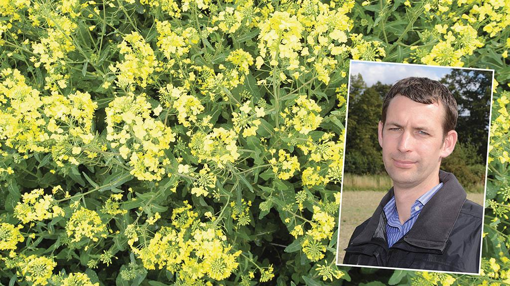 Give oilseed rape leaves a chance