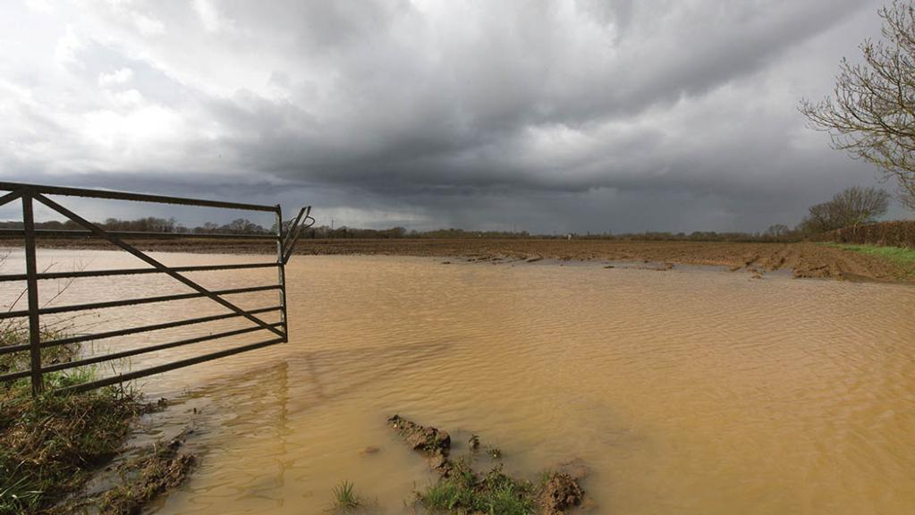 UK farmers face fodder shortages and flooding as weather wreaks havoc