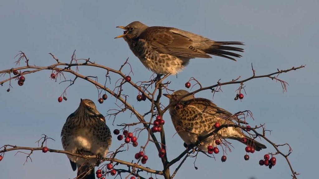 Record year for farmland birds thanks to conservation efforts