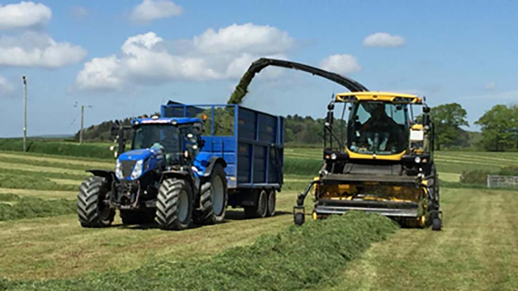 Sward cutting height should be targeted at five to seven centimetres