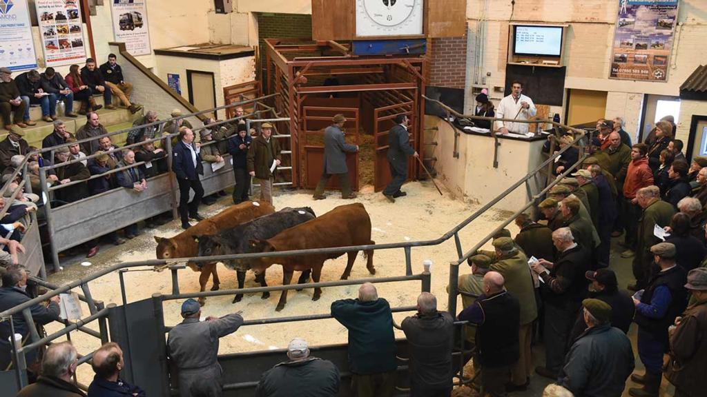 Auction mart diversification ideas include drive-thru cinema and car wash