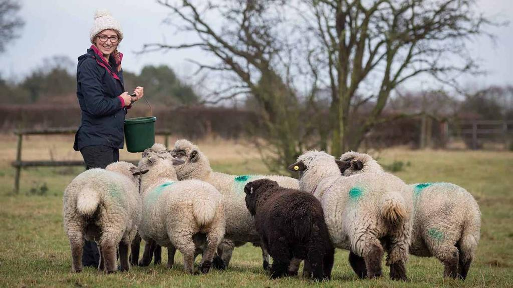 I Quit My Job To Farm: Katie Anderson, 26, Essex