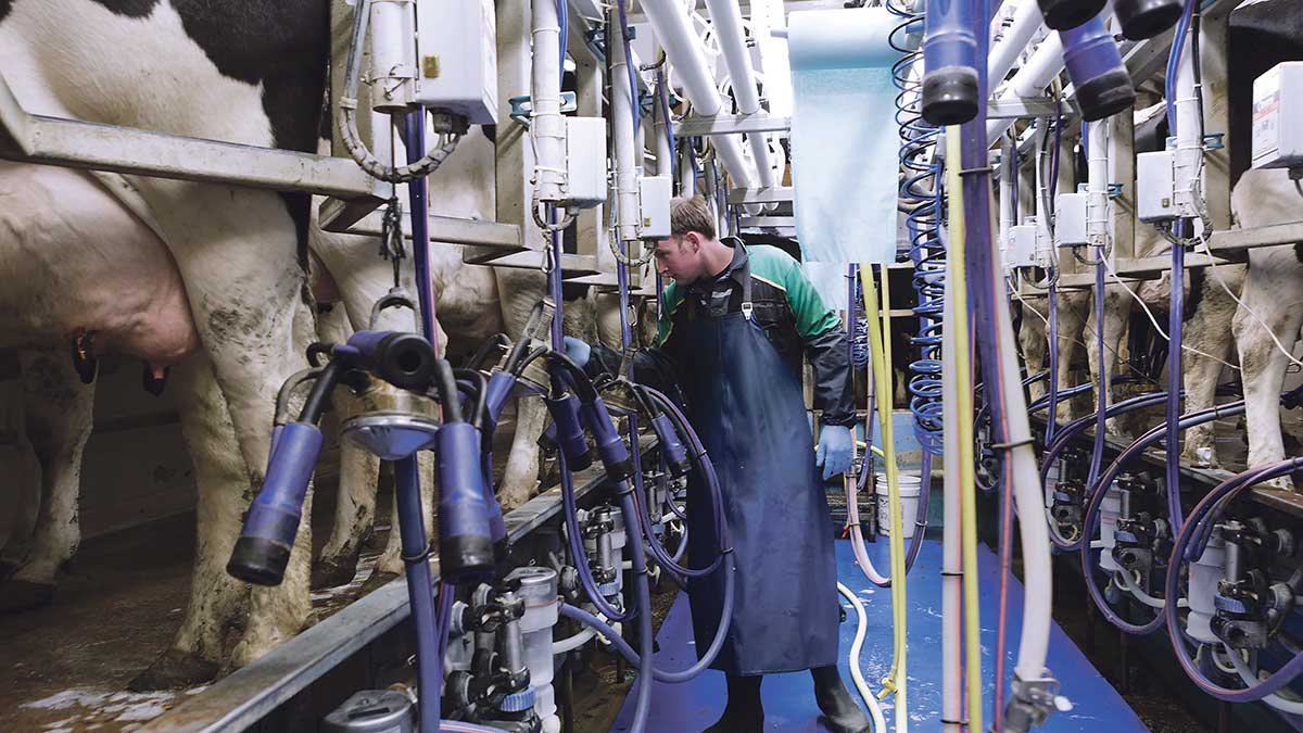 UK will not be flooded with New Zealand dairy products post-Brexit