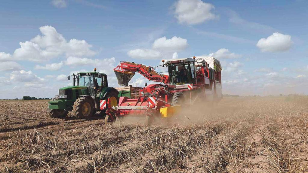 Potato production hits lowest level since 2012