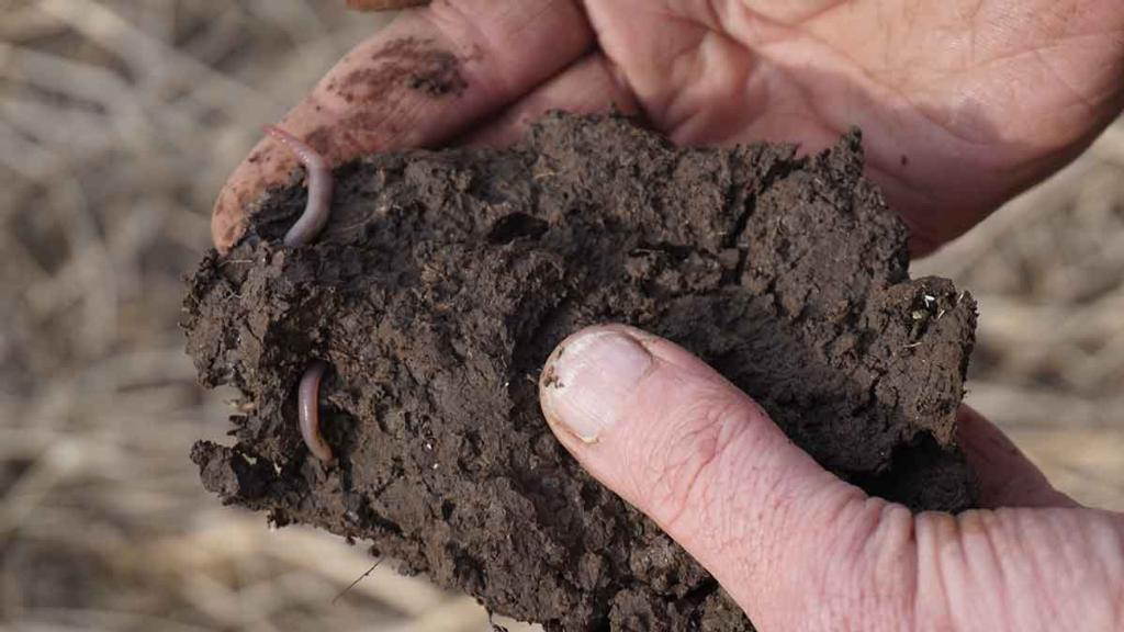 Video: Getting a feel for soil texture