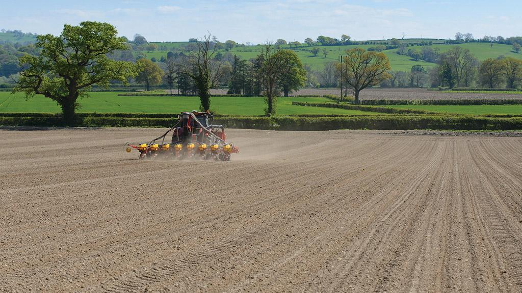 Maize Matters: Top seedbed preparation tips