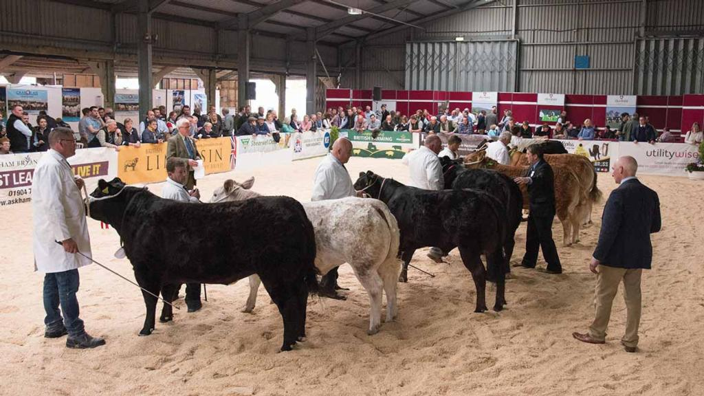 Beef Expo 2018 preview: A celebration of British Beef