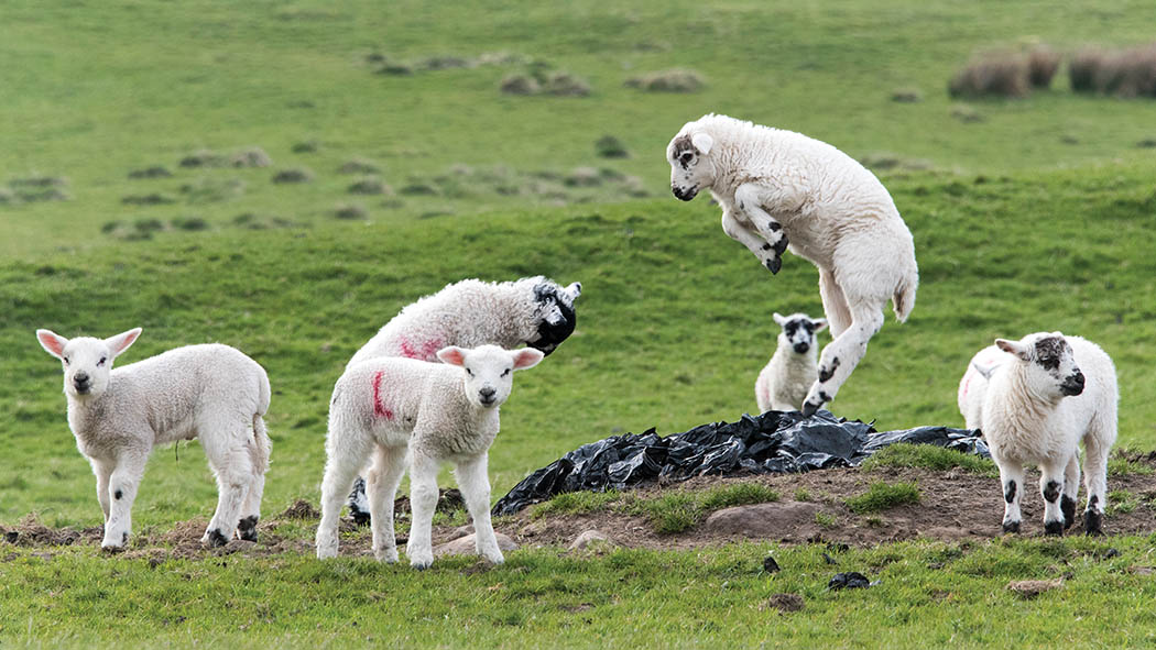 Fallen stock at highest levels 'probably ever' following tough lambing season