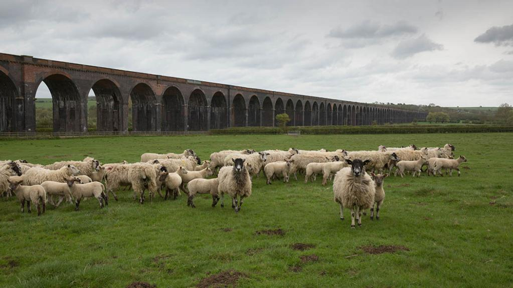 The 2,000 Mules lamb from the end of February.