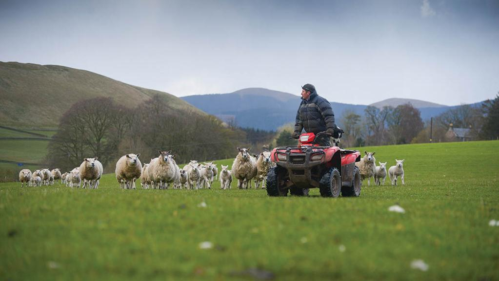 Careers special: Scottish Young Farmers showcase career choices