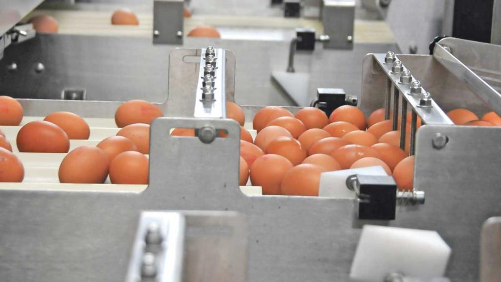 Egg industry submits FOIs to find out Government reasoning for no-deal tariffs