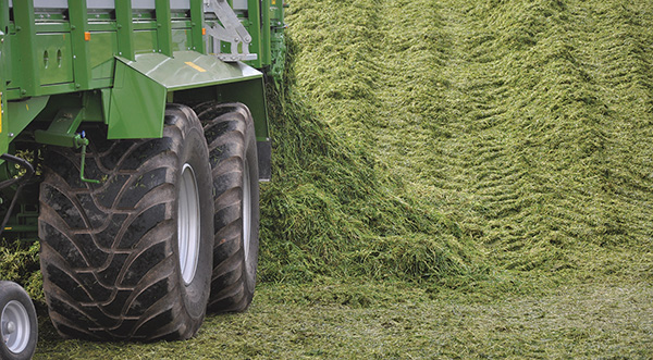 3. Silage production assessment