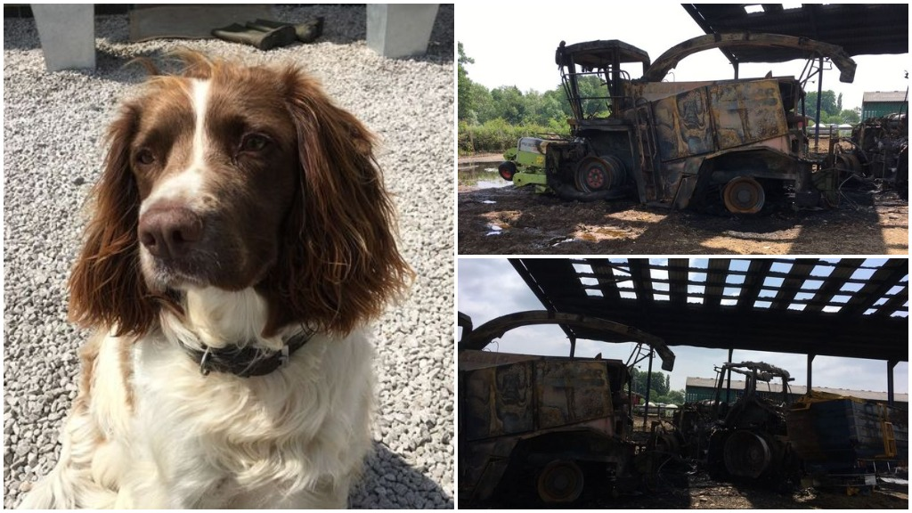 Hero farm dog named Ted saves livestock as fire destroys barn and machinery