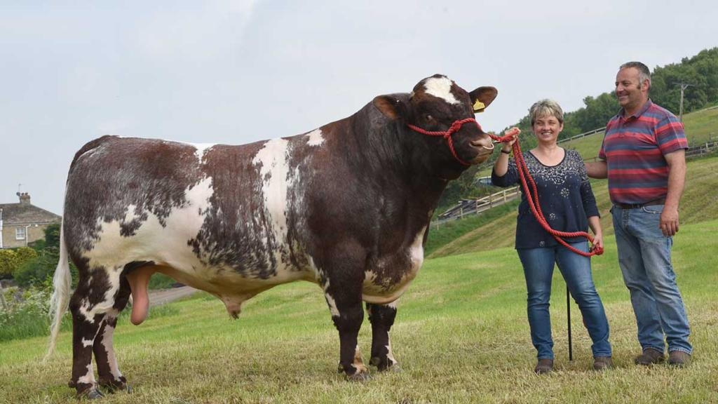 Royal Highland Show 2018: Hoping for a hat-trick in Beef Shorthorn lines