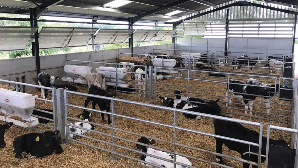 Calf rearers focused on liveweight gains