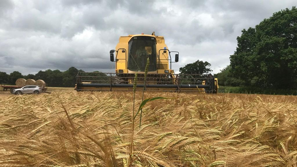 UK's 'first cereal harvest of the year' begins in Devon