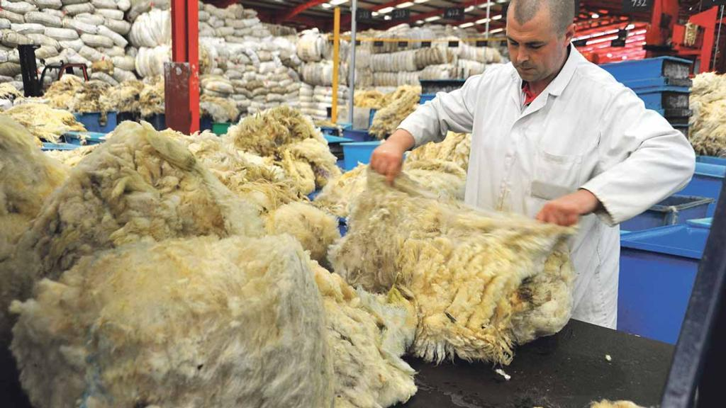 'British farmers will probably not make anything from wool this season'