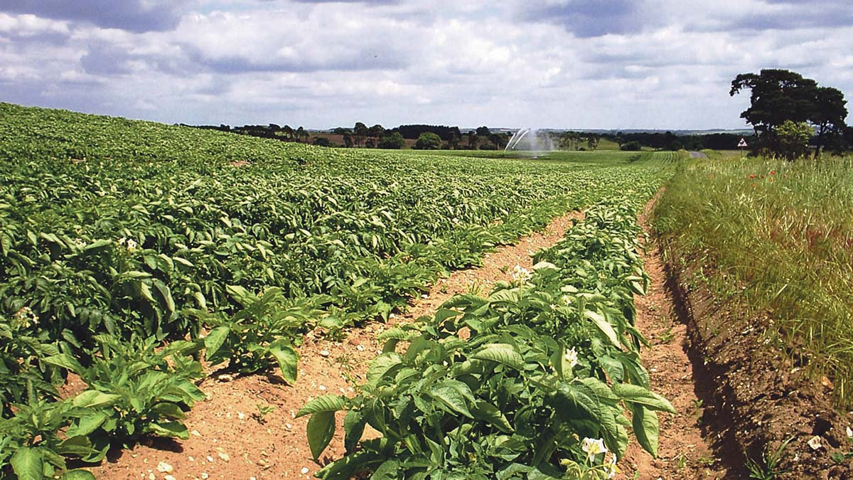 GB 2018 potato plantings third lowest on record