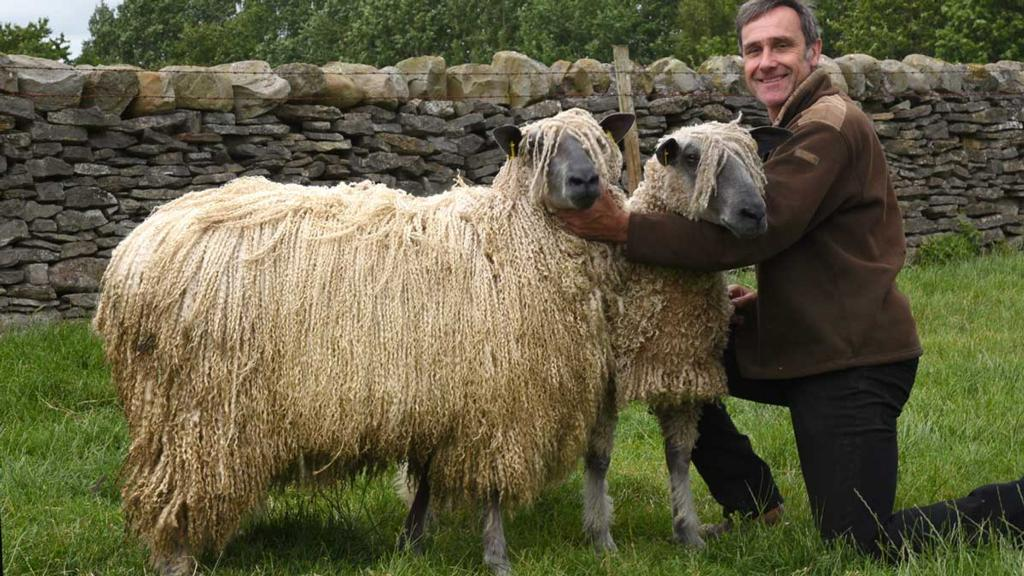 Long history of Wensleydale breeding and showing