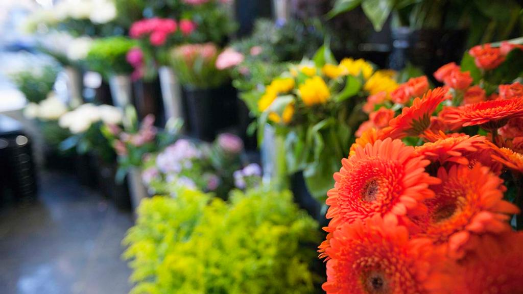 Aldi becomes first to sign up to NFU plants and flowers pledge