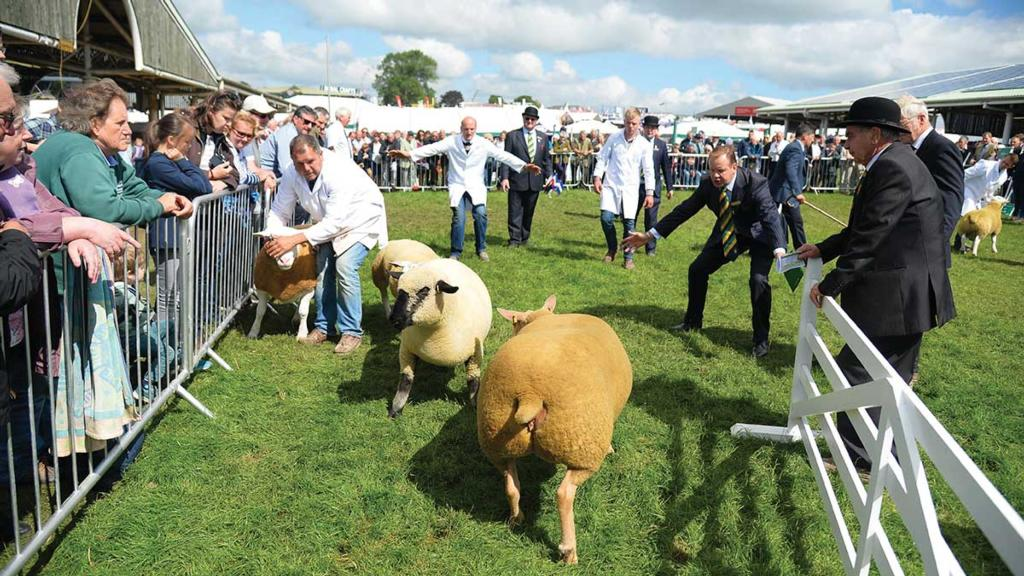 Everything you need to know about the Great Yorkshire Show 2018