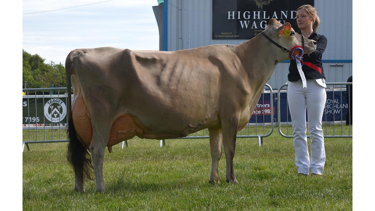 Inter-breed dairy champion Fourcrosses Anthony Carroza