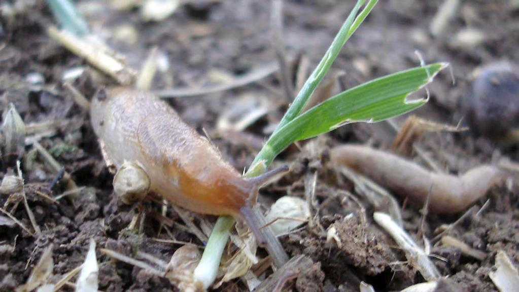 Farmers offered discounted slug pellets to improve water quality