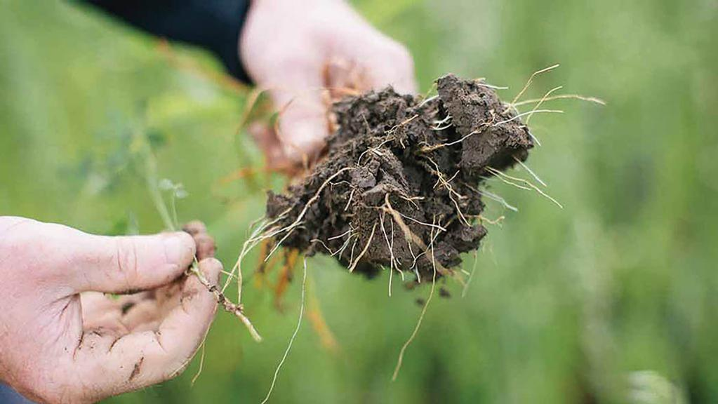 Cover crops needed to maximise benefits of no-till