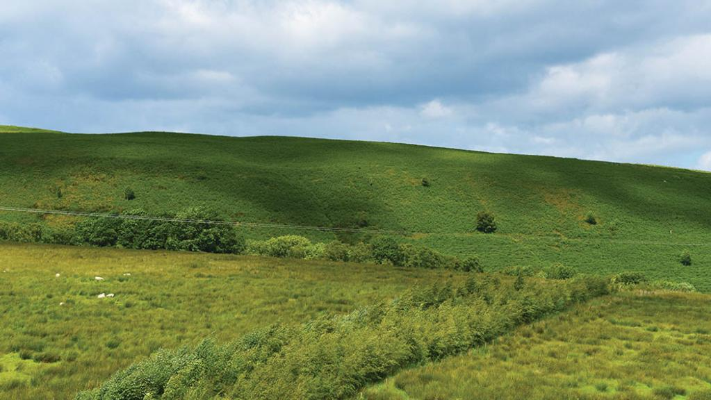 Shelter belts were planted which split an area of hill ground into paddocks.
