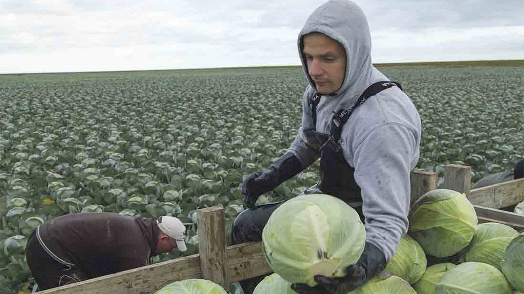 Michael Gove looking to Ukraine for agricultural workers