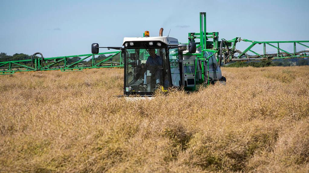 Tips for targeting pre-harvest glyphosate use