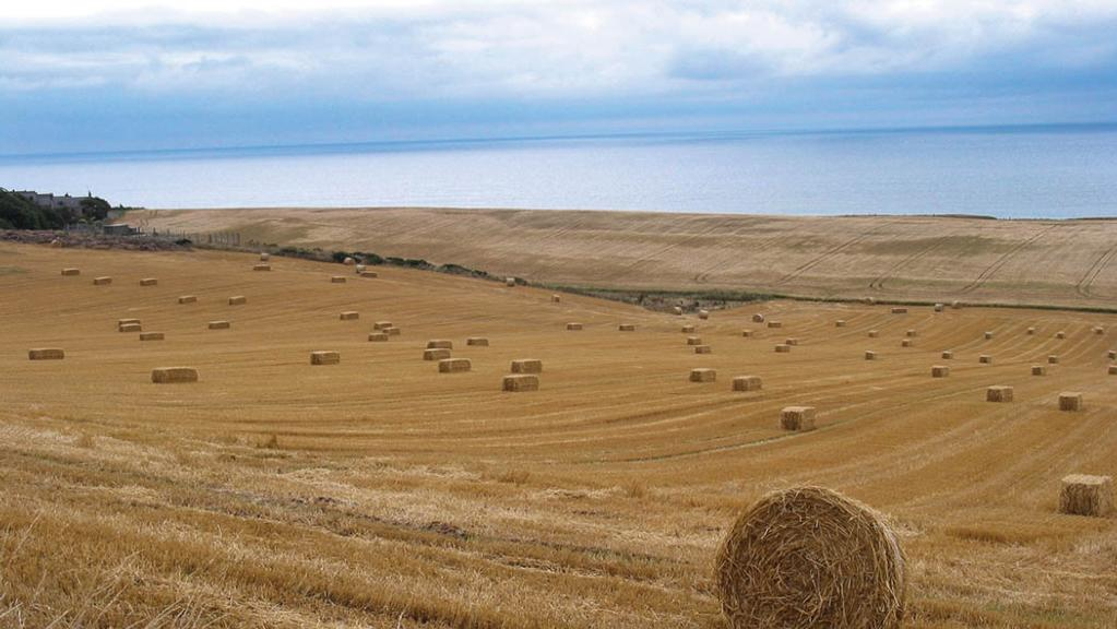 Straw shortage looms as UK heatwave continues