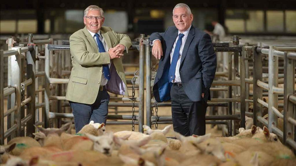 Optimism at UK auction marts despite the weather issues
