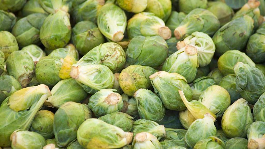 'There could be no sprouts at Christmas' - growers warn heatwave could affect festive vegetable