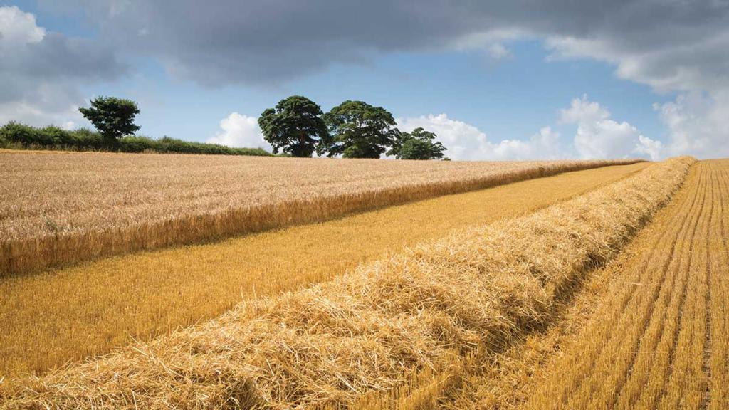 Straw prices reach 'unprecedented' levels in the UK