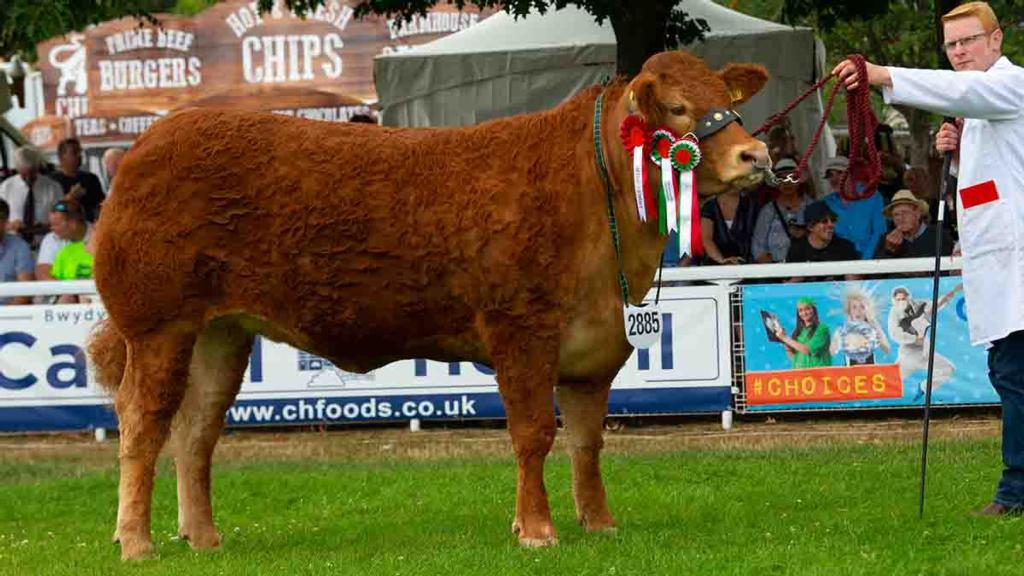 Inter-breed beef reserve champion, Graham's Melody, from Robert and Jean Graham, Sterling.