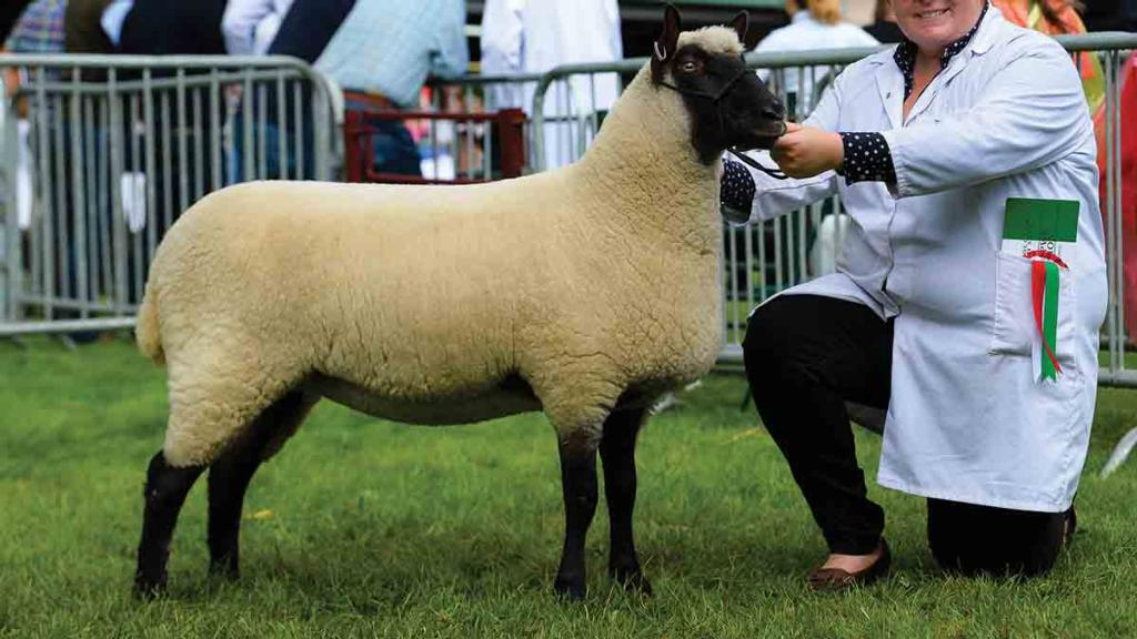 ROYAL WELSH SHOW: Clun Forest wins at Royal Welsh for the first time