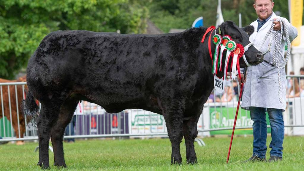 Commercial champion, Dream Girl, from Aled and Gwyn Roberts, Anglesey