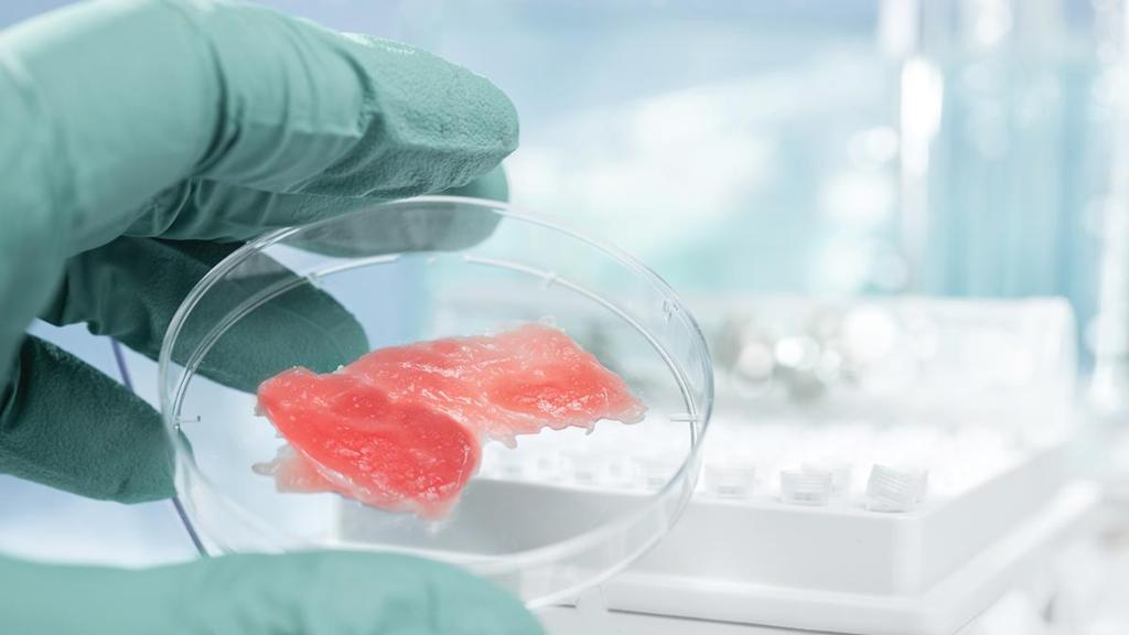 Lab-grown meat industry comes under the microscope