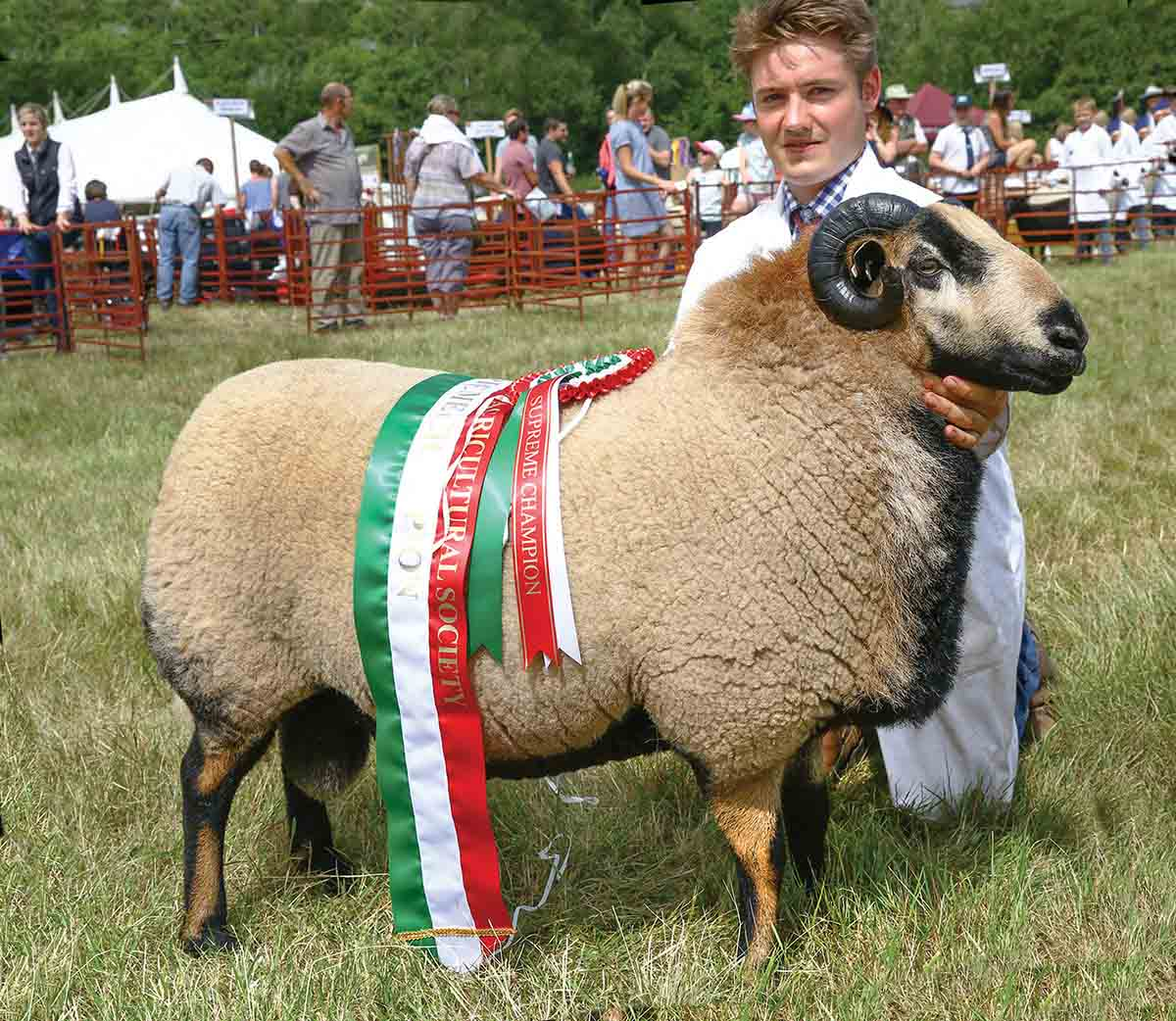 Inter-breed sheep and Welsh Badger Face champion from C., A. and R. Joseph.