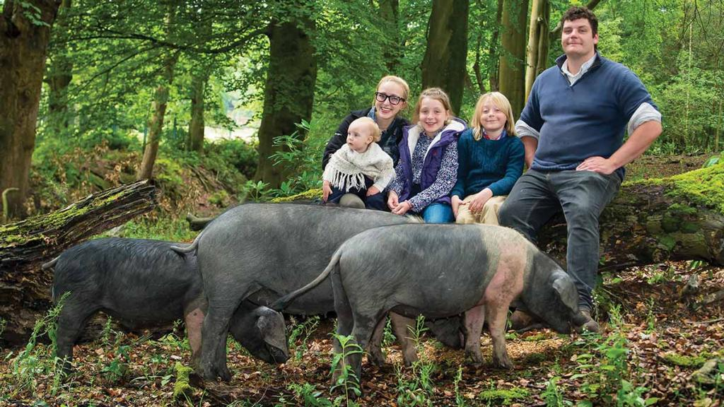 Backbone of Britain: Young couple striving to preserve diminishing saddleback pig