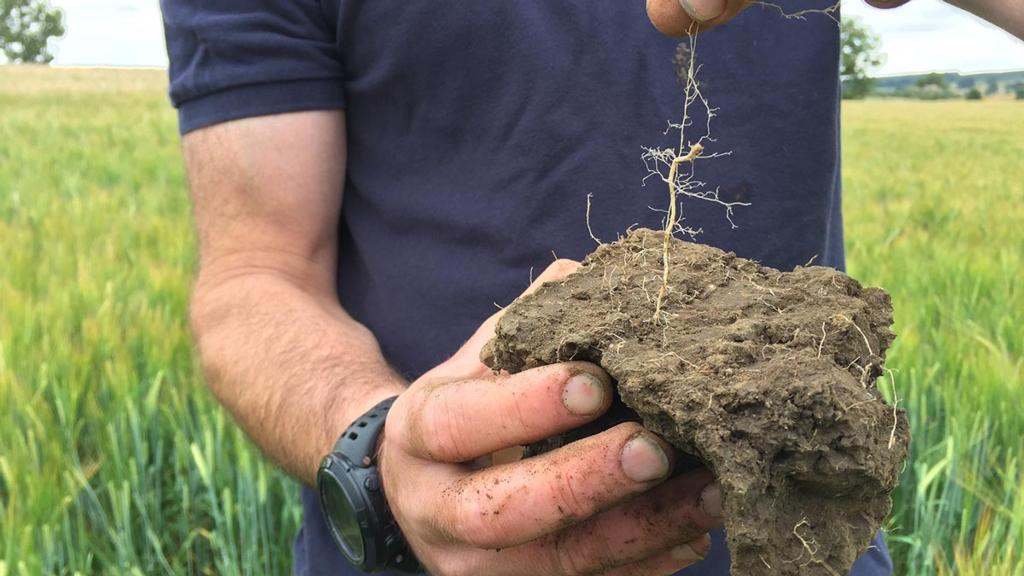 Video: Organic matter – quality over quantity