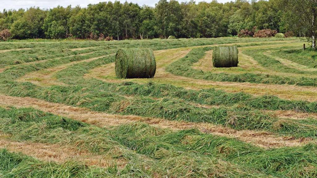Making silage in late summer and into autumn - what to look out for