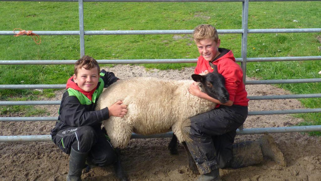 Young Iona farmers auction Suffolk lambs for charity