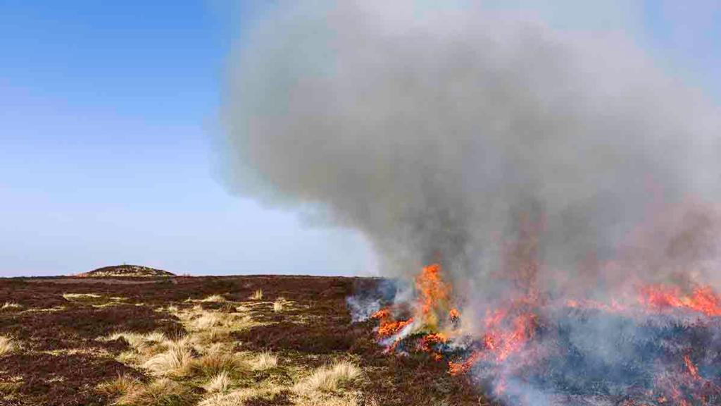 MP demands 'very large' fines for people starting wildfires with disposable BBQs