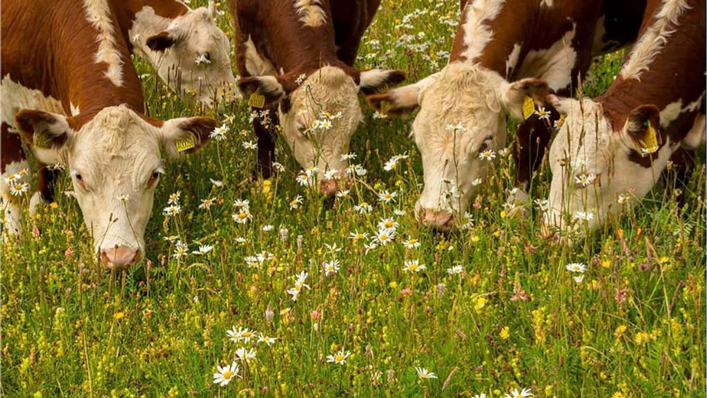 Pasture for Life helps wildlife and welfare