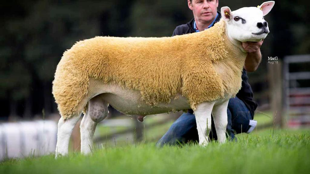 Royal Highland Show champion, Haddo Balvenie sold for 40,000gns.