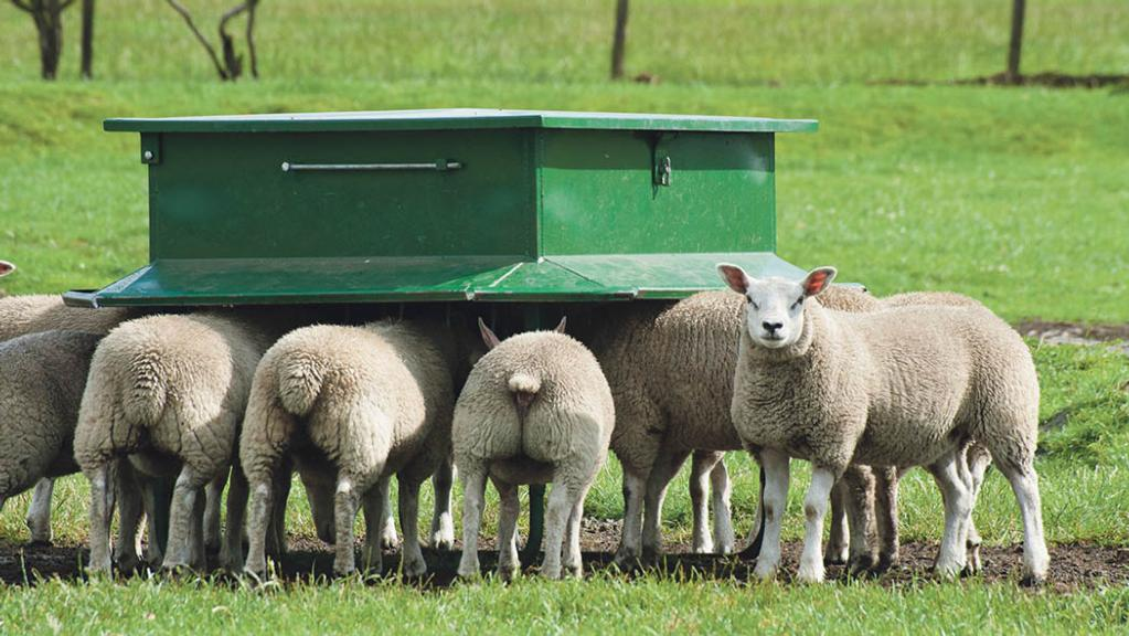 Sheep and lambing: Do not get caught out by 'low' fluke risk